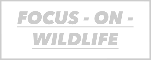 FOCUS-ON-WILDLIFE.